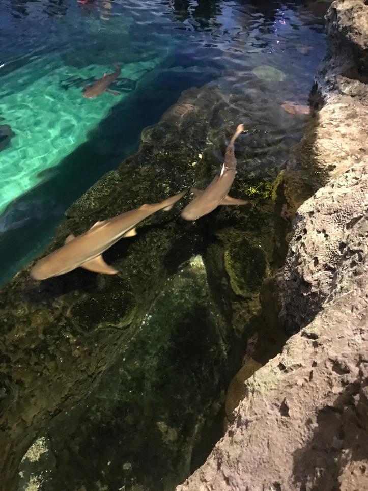 Ripley's Aquarium|Gatlinburg, TN - Andrea Beam